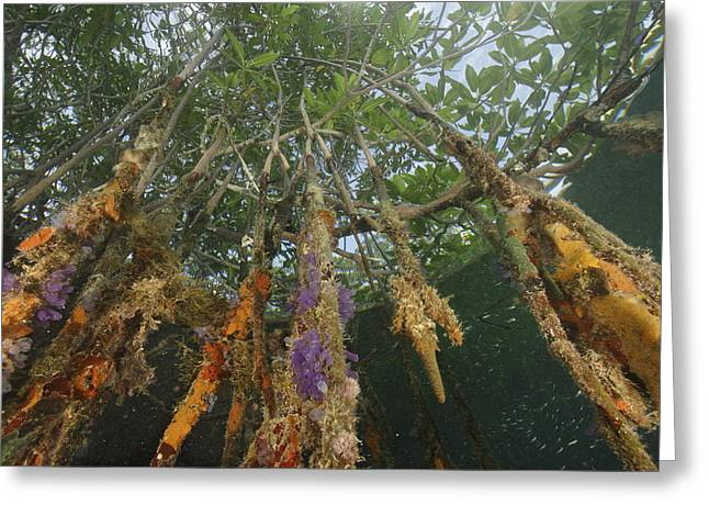 Invertebrate Life Growing On The Roots Greeting Card by Tim Laman