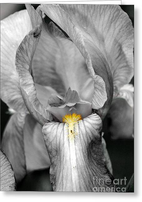 Greeting Card featuring the photograph Iris - Bw by Larry Carr