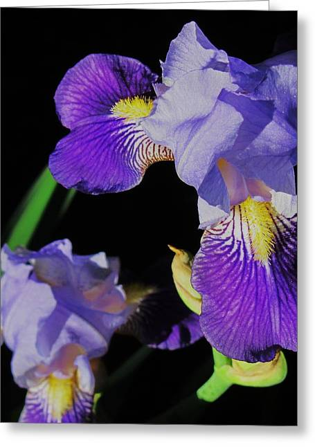 Iris-13 Greeting Card by Todd Sherlock
