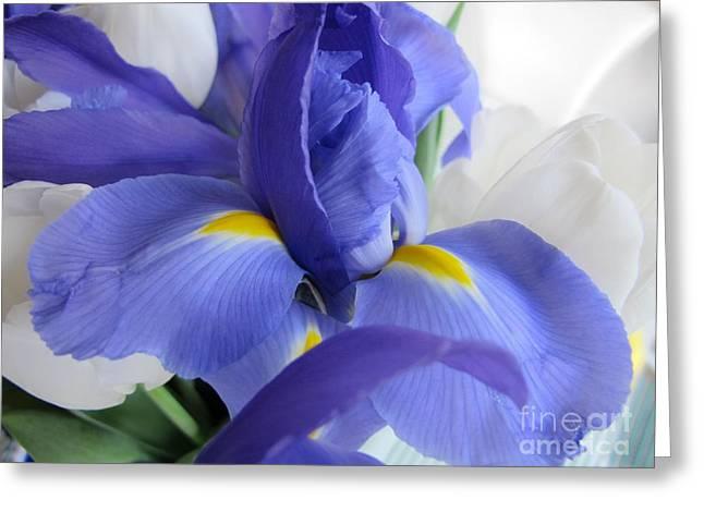 Greeting Card featuring the photograph Iris Bloom by Arlene Carmel