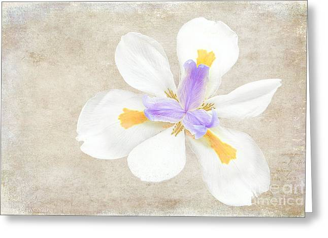 Iris Calling Greeting Card