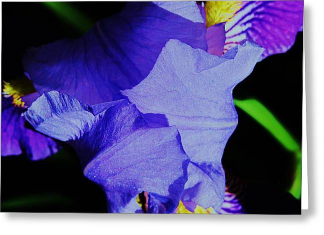 Iris Delight Greeting Card by Todd Sherlock