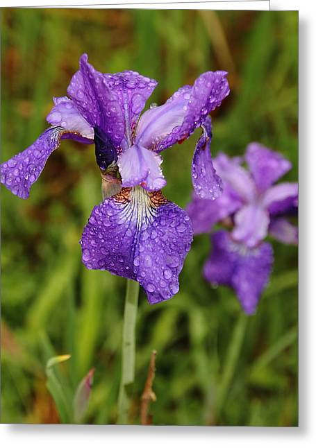 Greeting Card featuring the photograph Iris Dew by Coby Cooper
