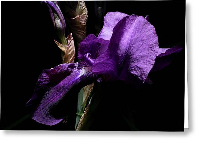 Her Majesty - Gladiola Greeting Card by Gilbert Artiaga