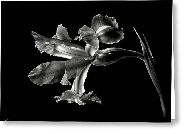 Iris In Black And White Greeting Card