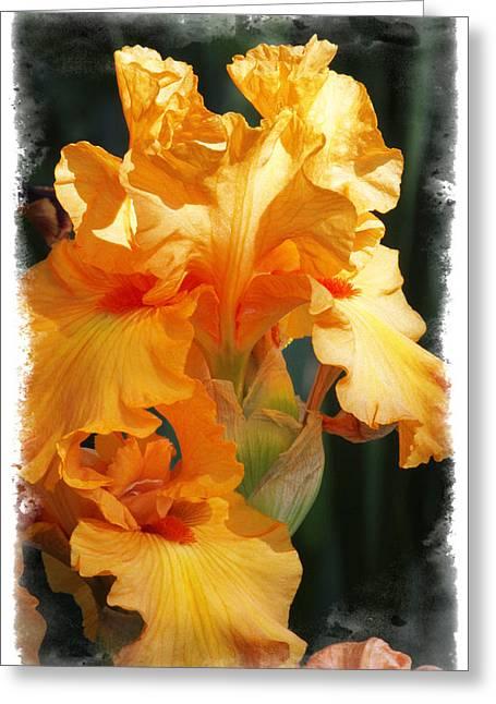 Iris Greeting Card by Judy Deist