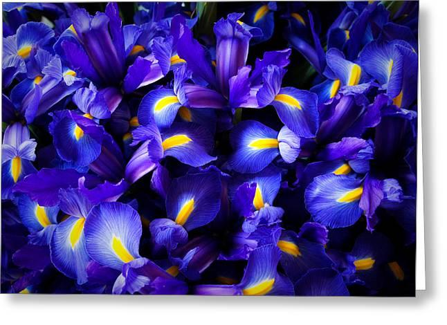 Iris Greeting Card by Lynn Wohlers