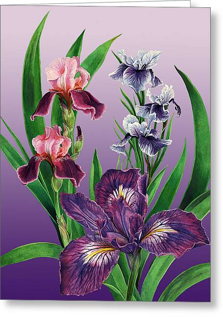 Iris On Purple Greeting Card