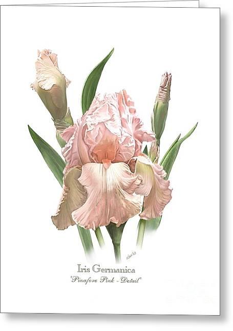 Iris Pinafore Pink Greeting Card