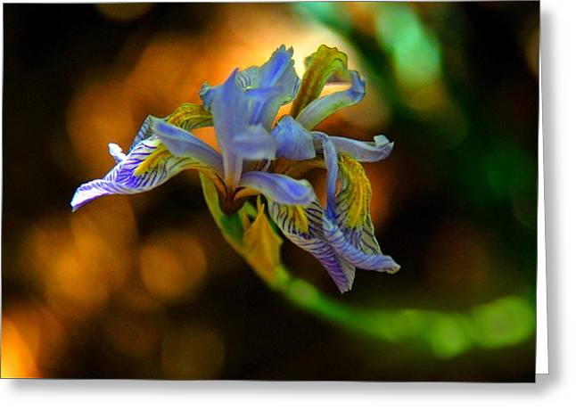 Greeting Card featuring the photograph Iris by Tam Ryan