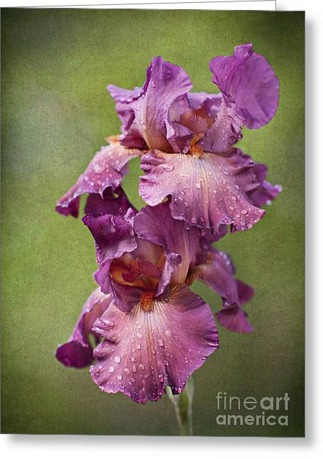 Greeting Card featuring the photograph Iris With Raindrops by Cheryl Davis