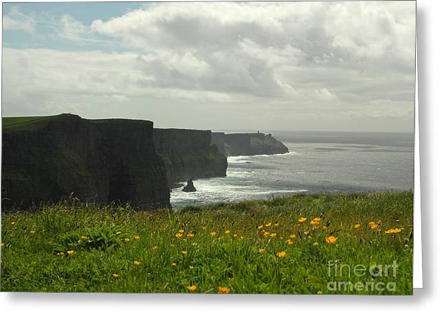 Irish Coast Cliffs Of Moher In Spring Ireland Greeting Card