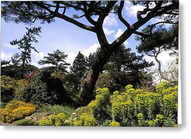 Irish National Botanic Gardens, Dublin Greeting Card by The Irish Image Collection