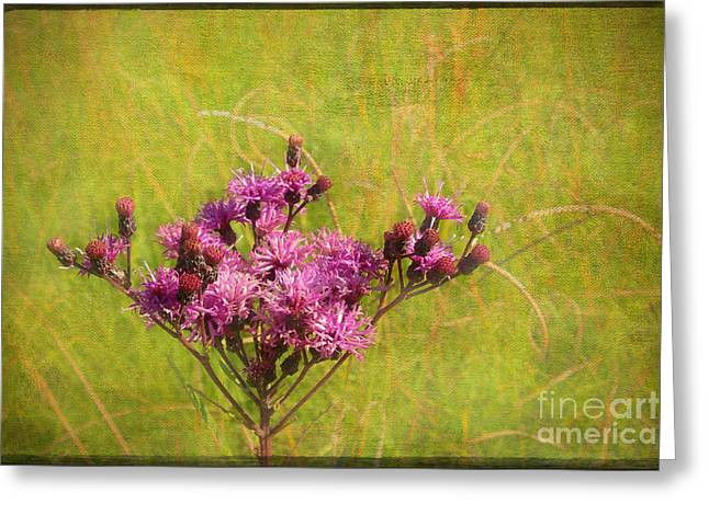 Ironweed In Autumn Greeting Card by Judi Bagwell