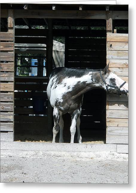 Is It Safe To Come Out Greeting Card by Judy Hall-Folde