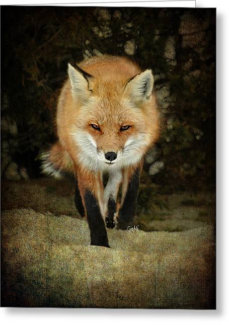 Island Beach Fox Greeting Card
