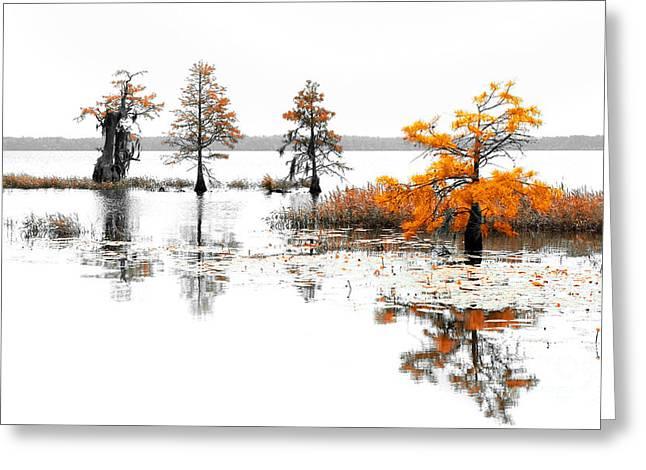 Isle Of Trees Greeting Card by Dan Carmichael