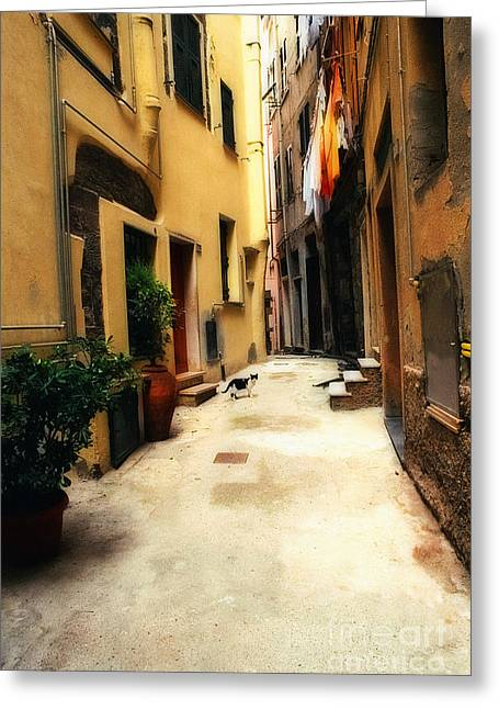 Italian Alley Kitty Greeting Card by Virginia Furness