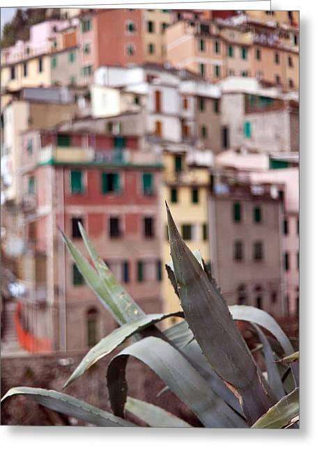 Italian Aloe Greeting Card by Mike Reid