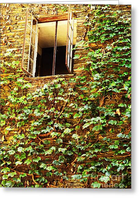 Ivy-covered Building With Window Greeting Card