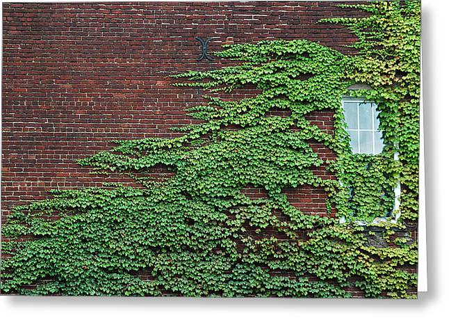 Ivy Covered Window Greeting Card by Gary Slawsky