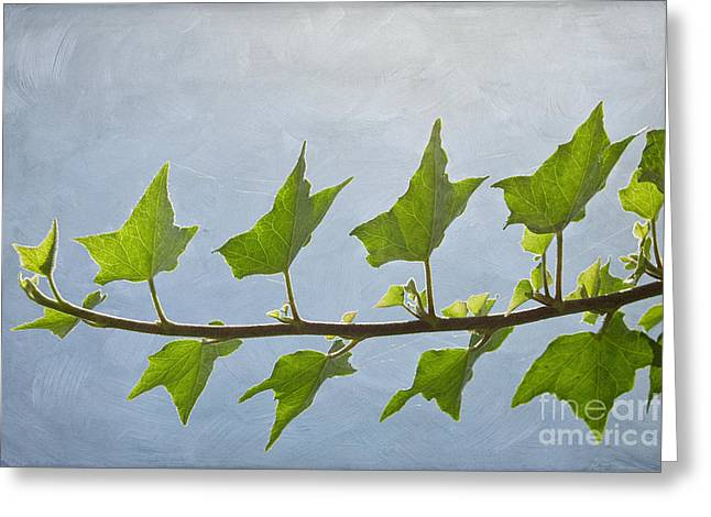 Ivy To The Left Greeting Card