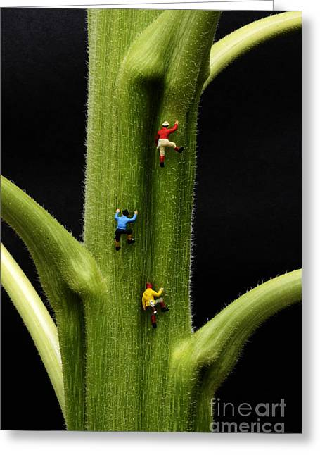 Jack And His Friends Climb The Beanstalk Greeting Card by Bob Christopher