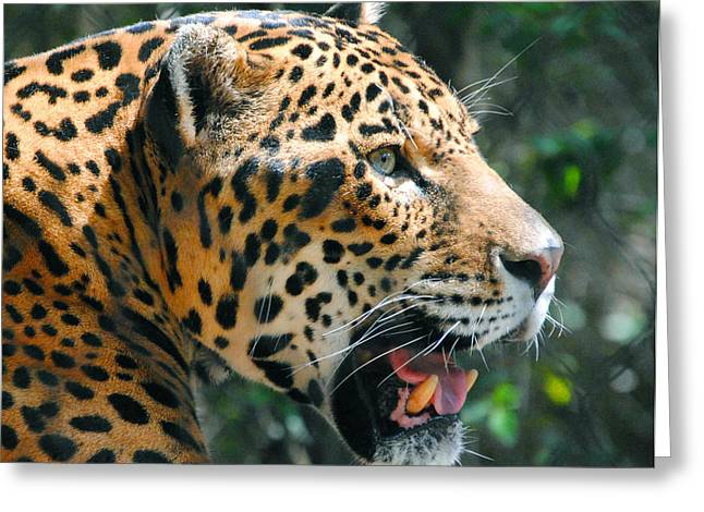 Jaguar In May Greeting Card by DiDi Higginbotham