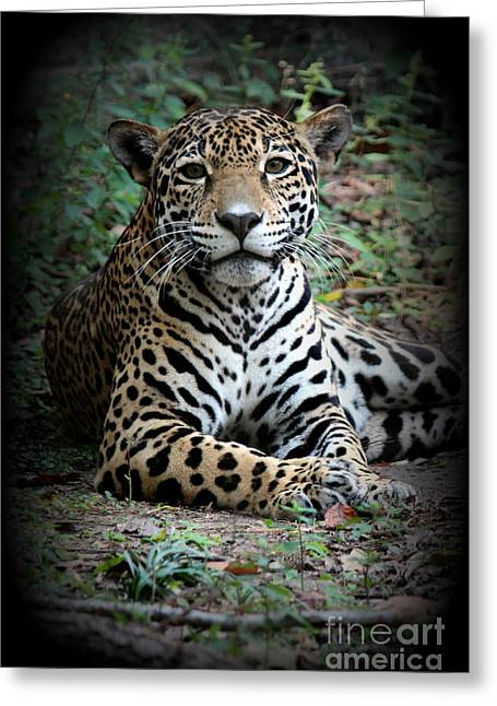 Greeting Card featuring the photograph Jaguar Portrait by Kathy  White