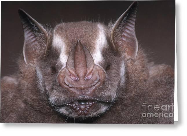 Jamaican Fruit Bat Greeting Card