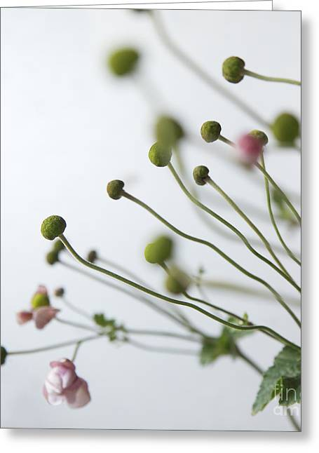 Japanese Anemones Greeting Card by Ruby Hummersmith