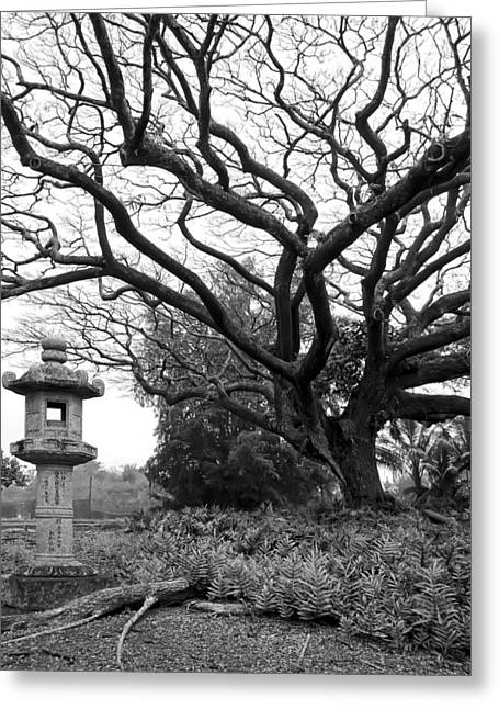 Japanese Lantern And Tree - Liliuokalani Park - Hilo Hawaii Greeting Card by Daniel Hagerman