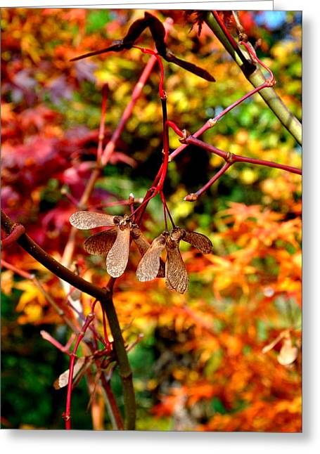Japanese Maple 12 Greeting Card by Tanya  Searcy