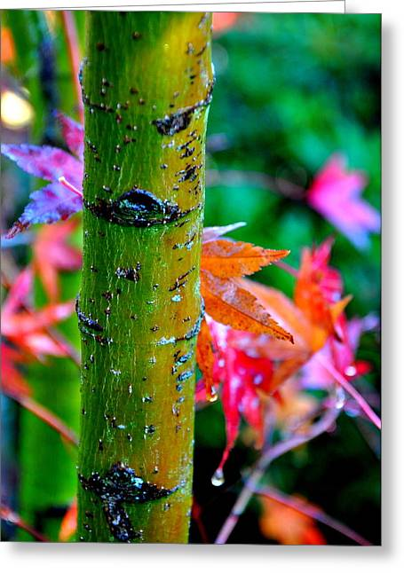 Japanese Maple 2 Greeting Card by Tanya  Searcy