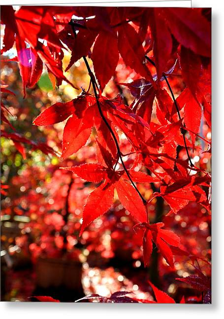 Japanese Maple 3 Greeting Card by Tanya  Searcy