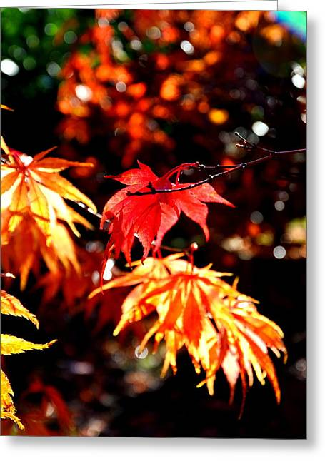 Japanese Maple 4 Greeting Card by Tanya  Searcy