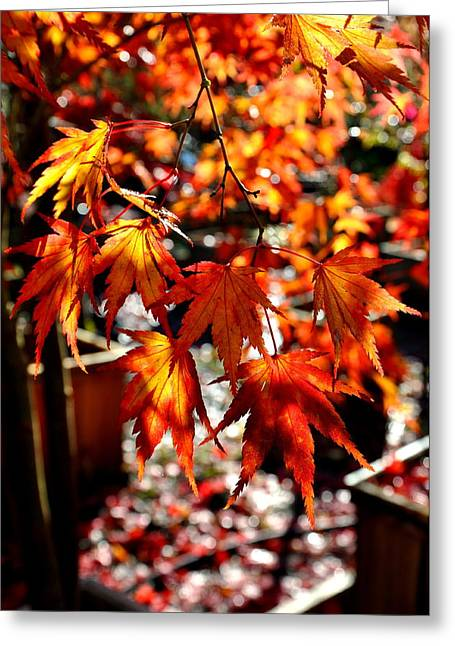 Japanese Maple 5 Greeting Card by Tanya  Searcy