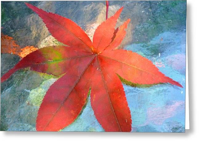 Japanese Maple Greeting Card by Beth Akerman