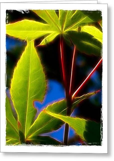 Japanese Maple Leaves Greeting Card by Judi Bagwell