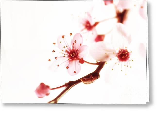 Japanischer Fruehblueher Greeting Card by Tanja Riedel