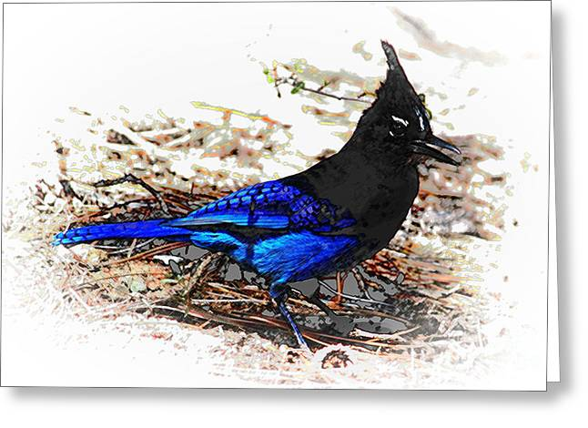 Jay On Pine Needles Greeting Card by Val Armstrong