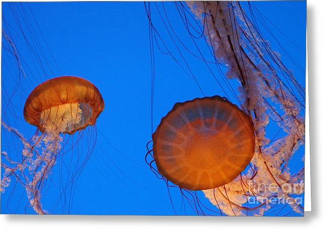 Jellies Greeting Card by Tap On Photo
