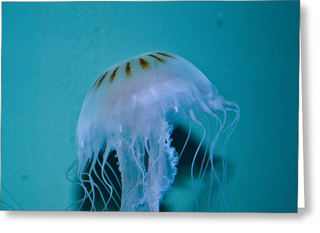 Jelly Fish Wil 258 Greeting Card