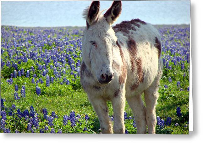 Jesus Donkey In Bluebonnets Greeting Card by Linda Cox