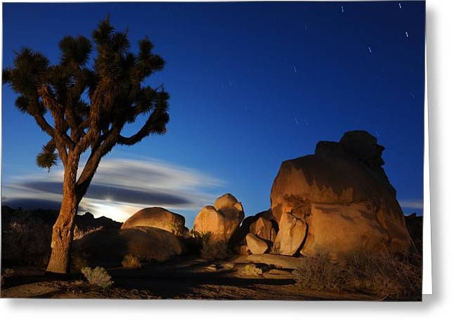 Joshua Tree At Night Greeting Card by Dung Ma