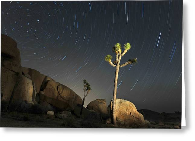 Joshua Tree Star Trails Greeting Card by Dung Ma