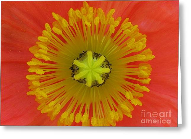 Greeting Card featuring the photograph Joyful by Tina Marie