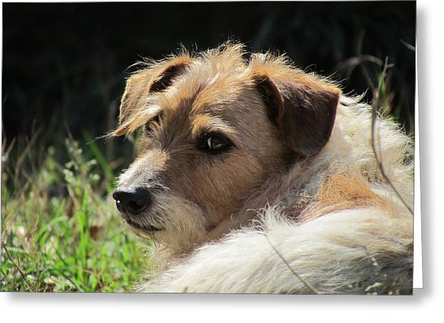 JRT Greeting Card by Ginger Adams