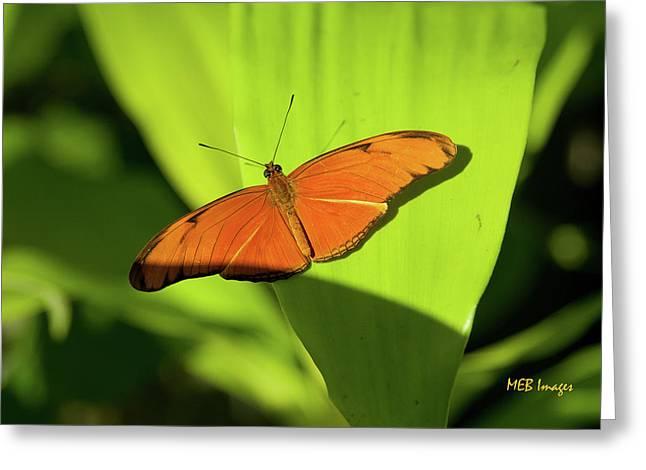 Julia Butterfly Greeting Card by Margaret Buchanan