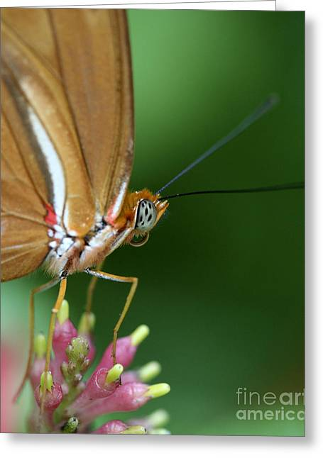 Julia Butterfly Greeting Card by Pamela Gail Torres